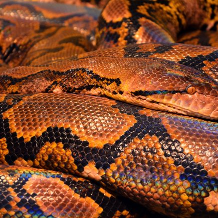 snake print spring summer 2019 - last-report.com
